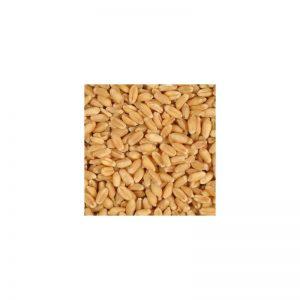 Trigo ecologico 25 Kg