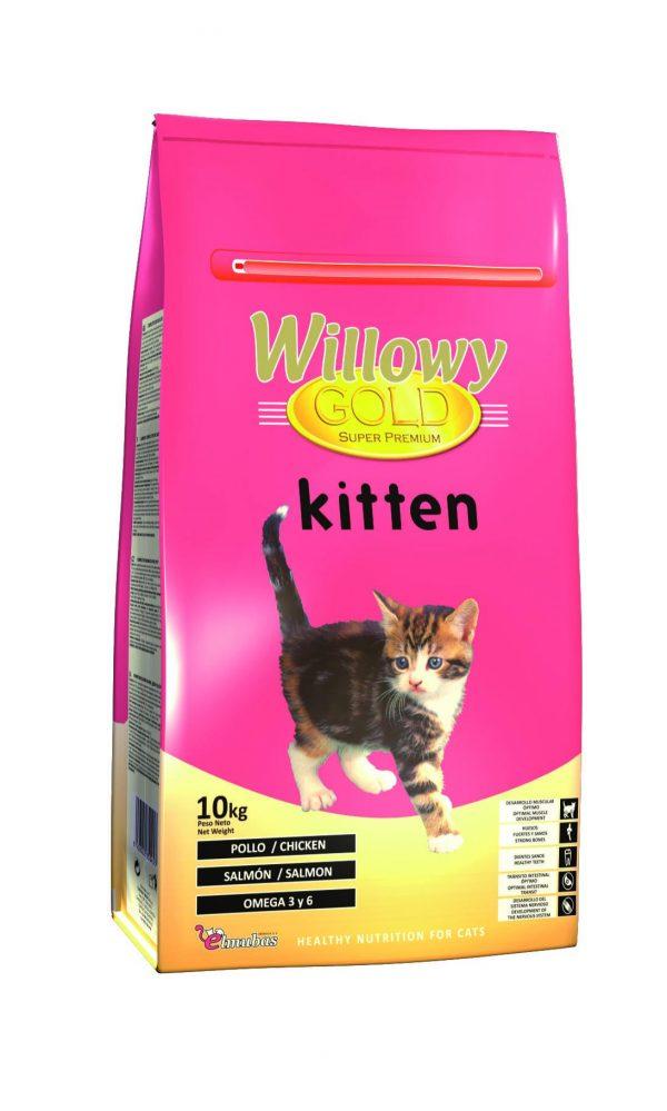 Willowy gold kitten 10 Kg